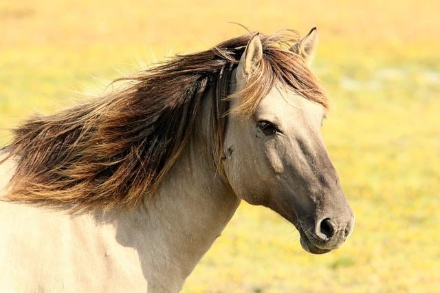 Pferdewirt(in) außergewöhnlich Berufsbilder oft draußen Sport & Bewegung