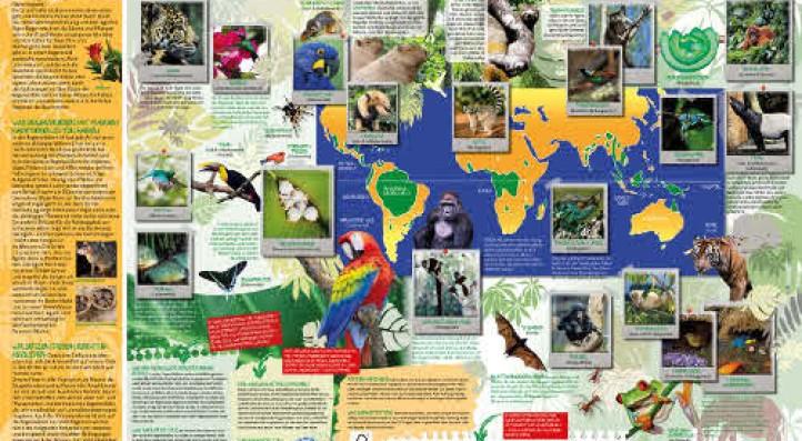 Poster zur Biodiversität im Regenwald