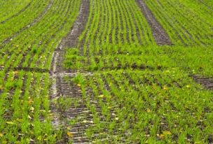 Pflanzentechnologen- was machen die eigentlich?