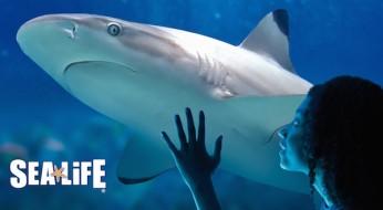 SEA LIFE Aquarien – das Klassenzimmer unter Wasser