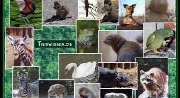 Tierwissen.de