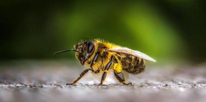 Das spannende Leben der Insekten