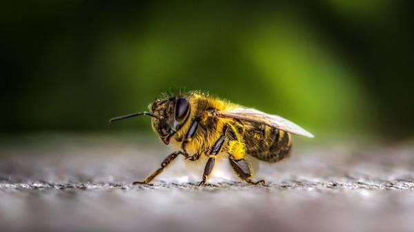 Das spannende Leben der Insekten Biologie