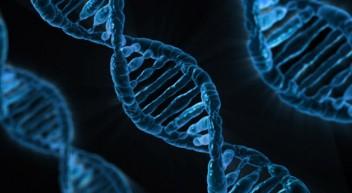 Studiengänge der Biophysik bilden Physiker mit fundierten biologischen Kenntnissen aus