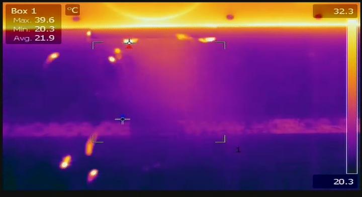Ein- und ausfliegende Honigbienen werden bei HOBOS von einer Wärmebildkamera aufgenommen.