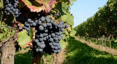 Studiengang Weinbau und Oenologie