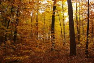 Forstwirte – Was machen die eigentlich?