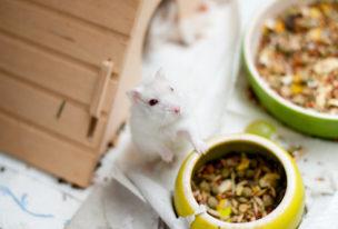 Tiermedizinische(r) Fachangestellte(r) – Was machen die eigentlich?