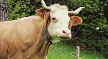 """""""Agribusiness"""" – Agrarkompetenz und ökonomisches Know-How"""