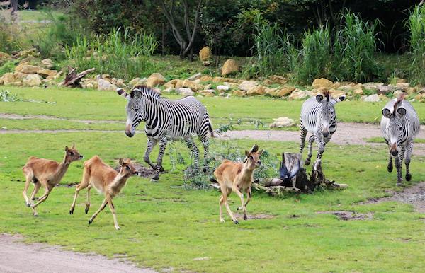 Kiwara-Savanne_Zoo Leipzig
