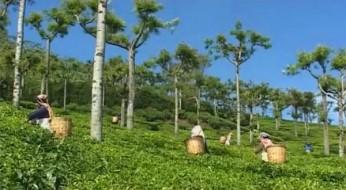 Video: Wie funktioniert das Fairtrade-System?