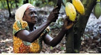 Kakao – Das Unterrichtsmaterial