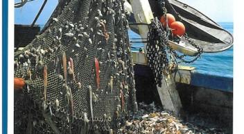 Unterrichtsmaterial: Überfischung