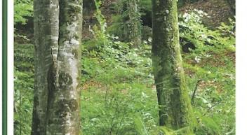 Unterrichtsmaterial: Wald und Holz