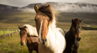 Pferd & Management in Holland studieren