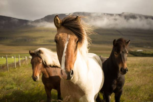 pferde management studieren