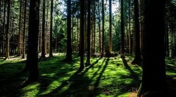 Erklärfilm Biodiversität – aus der Reihe WissensWerte