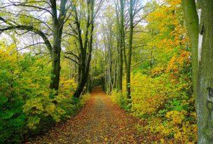 Ausbildung: Natur- und Landschaftspfleger/in (Ranger)
