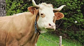 Milchwirtschaftliche Laboranten – was machen die eigentlich?