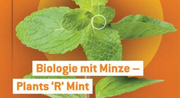 """Biologie mit Minze – Plants 'R' Mint (aus der Broschüre """"Alles im grünen Bereich"""")"""