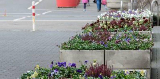 Studierende der FH Bingen entwickeln Umsetzungskonzepte für den Anbau von Nutzpflanzen in öffentlichen Grünflächen