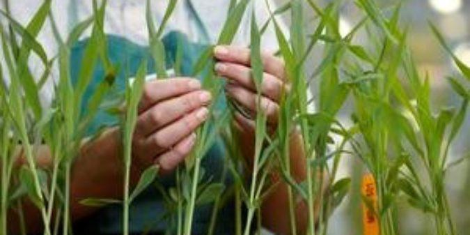Pflanzentechnologe/-in –  Unser Erfahrungsbericht