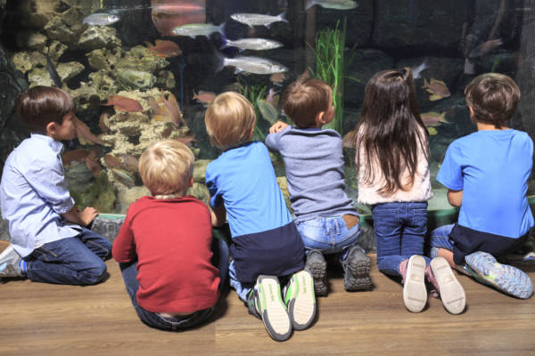 SEA LIFE Aquarien – Tauchen Sie ein und erleben Sie noch Mee(h)r! Exkursionen & Klassenfahrten Für Lernende Lernorte Lernorte: Erlebnismuseen Schulfächer Übergreifend