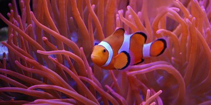 Meeresbiologie studieren