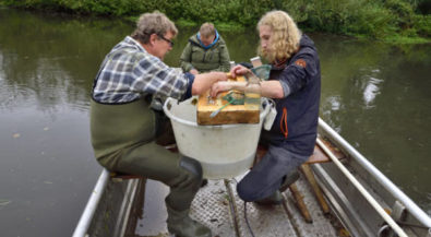 Erfahrungsbericht FÖJ an der Biologischen Station Krickenbecker Seen