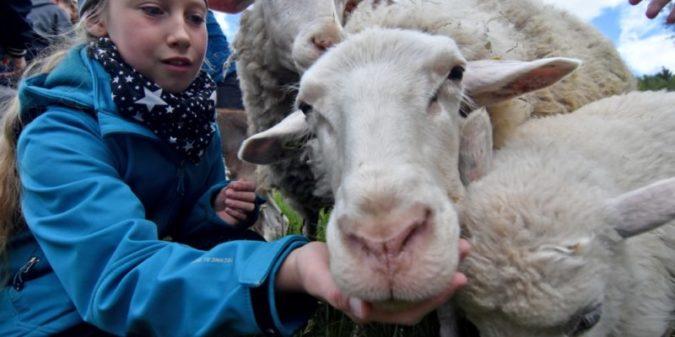"""Wettbewerb """"Natur macht Schule"""": Aktionen gegen das Artensterben gesucht"""