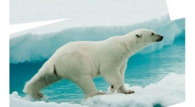 Arktis: Schutzgebiet oder industrielle Nutzung ohne Grenzen?